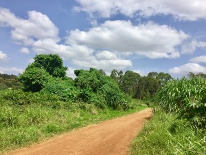 Traveling along the many kms of trails in Karura. Taken right after we spotted monkeys!