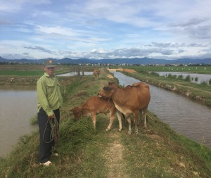 Mr. Dung with his cow and calf, funded by AP donors.