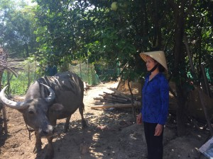Mrs. Duong Thi An with her newly purchased buffalo.
